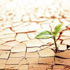 Cómo desarrollar una organización resiliente