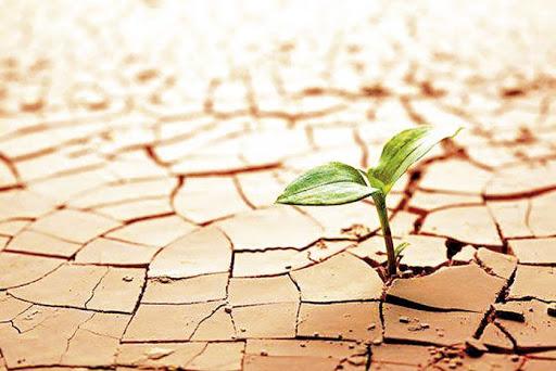 ¿Cómo desarrollar una organización resiliente?